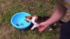 Man put crucian fisch in bowl, cat catch with claw and eat Stock Footage