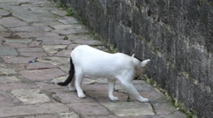 Cats in a street black white stray - stock footage