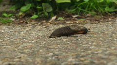 Snail crawling on road timelapse Stock Footage