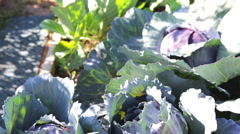 Vegetable garden Stock Footage