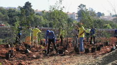 Men planting a tree. Workers. Stock Footage