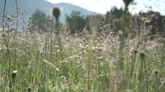 Morning dew on plants of mountain meadow-slow motion fart Stock Footage