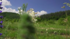 Beautiful flower herbs with background sky and clouds Stock Footage