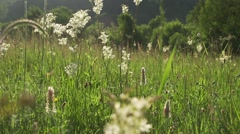 Beautiful meadow with herbs lit by sunset-slow motion movement Stock Footage
