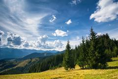 Amazing sunny landscape with pine tree highland forest at carpathian mountain Stock Photos