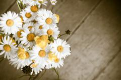 Beautiful tender bouquet of summer meadow flowers with wild chamomiles on woo Stock Photos