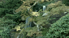 Japanese Maple and Waterfall 03 - 4k UHD Stock Footage