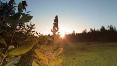 Cinematic landscape forest scene during Sunset. Ending shot Stock Footage