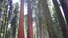 Sequoia National Forest Stock Footage