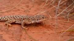 Lizard moving under thick grass Stock Footage