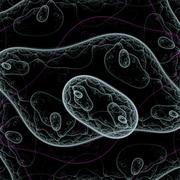 Bacteria under microscope Stock Illustration