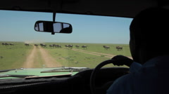 DRIVING PERSPECTIVE WILDEBEEST SERENGETI HERD MIGRATION Stock Footage