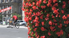 Bikers and cars seen on boulevard, flower decoration on sidewalk, modern street  Stock Footage