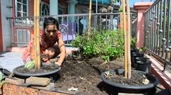 Thai woman gardening at vegetable garden in House Stock Footage