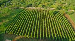 Vineyard aerial circular shoot Stock Footage