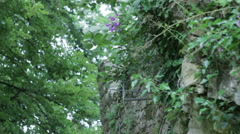 Flower on old wall Stock Footage
