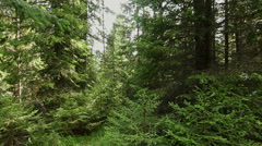 Walking through mountain forest, steady cam shot. POV Stock Footage