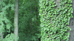 Green old wall Stock Footage