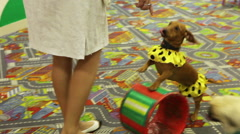 Trained dogs Stock Footage