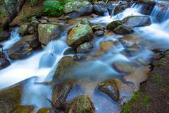 mountain rocky stream closeup photo. colorado fauna and flora. - stock photo