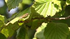 Wildlife insect fly sitting on a leaf Stock Footage