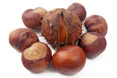 conkers - aesculus hipocastanum - stock photo