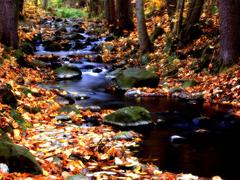 Autumn creek in the forest with fallen leaves Stock Photos