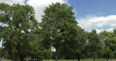 Parc Jeanne Mance in Montreal - stock footage
