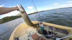 Cathing pike in the Baltic sea on fly fishing Stock Footage