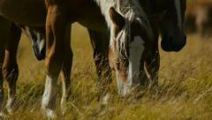 Brown horses grazing grass Stock Footage