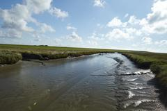westerhever (germany) - salt meadows with ditch - stock photo