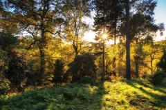 Stunning vibrant autumn landscape of sunburst through trees in forest Stock Photos