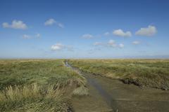 Westerhever (germany) - salt meadows with ditch Stock Photos
