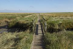 westerhever (germany) - salt meadow with footbridge - stock photo