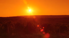 Valley vineyard at sunset pan shot - stock footage