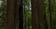 Stock Video Footage of 4K Redwood Forest Dolly 01 Big Sur California