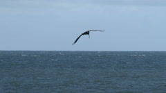 Brown Pelicans In Flight Over the Sea Stock Footage