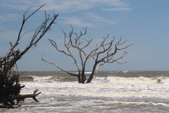 Bone yard beach Botany Bay, South Carolina Stock Photos