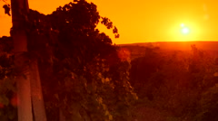 Setting red sun over vineyard hills Stock Footage