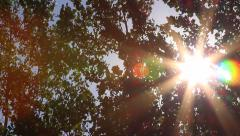 Sunlight through trees Stock Footage