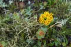 Bee pollinates wildflowers Stock Photos
