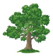 Stock Illustration of Oak tree and green grass