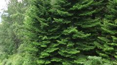 Beautiful vegetation on the hillside of mount tserkovka in belokurikha. altai Stock Footage