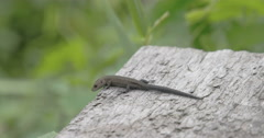 A common lizard on top of the roof in the forest Stock Footage