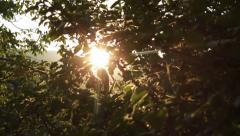 Apple Tree at Sunset HD - stock footage