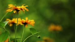 Summer Flowers HD Stock Footage