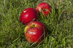 Waterdrops on apples Stock Photos