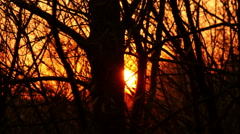 Sunset Forest Trees Time Lapse 4K Video - stock footage