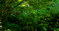 4K Green Japanese Gardens and Stream Stock Footage