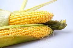 Delicious yellow summer corn on the cob Stock Photos